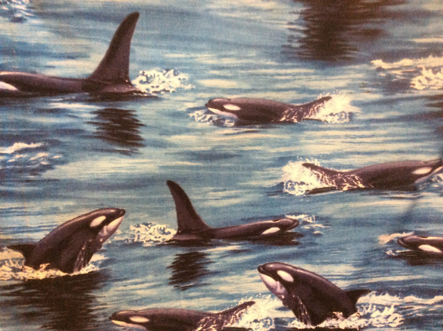 Ocean scene of orca whales in in the water with dorsal fins visible. Some are emerging from the wate